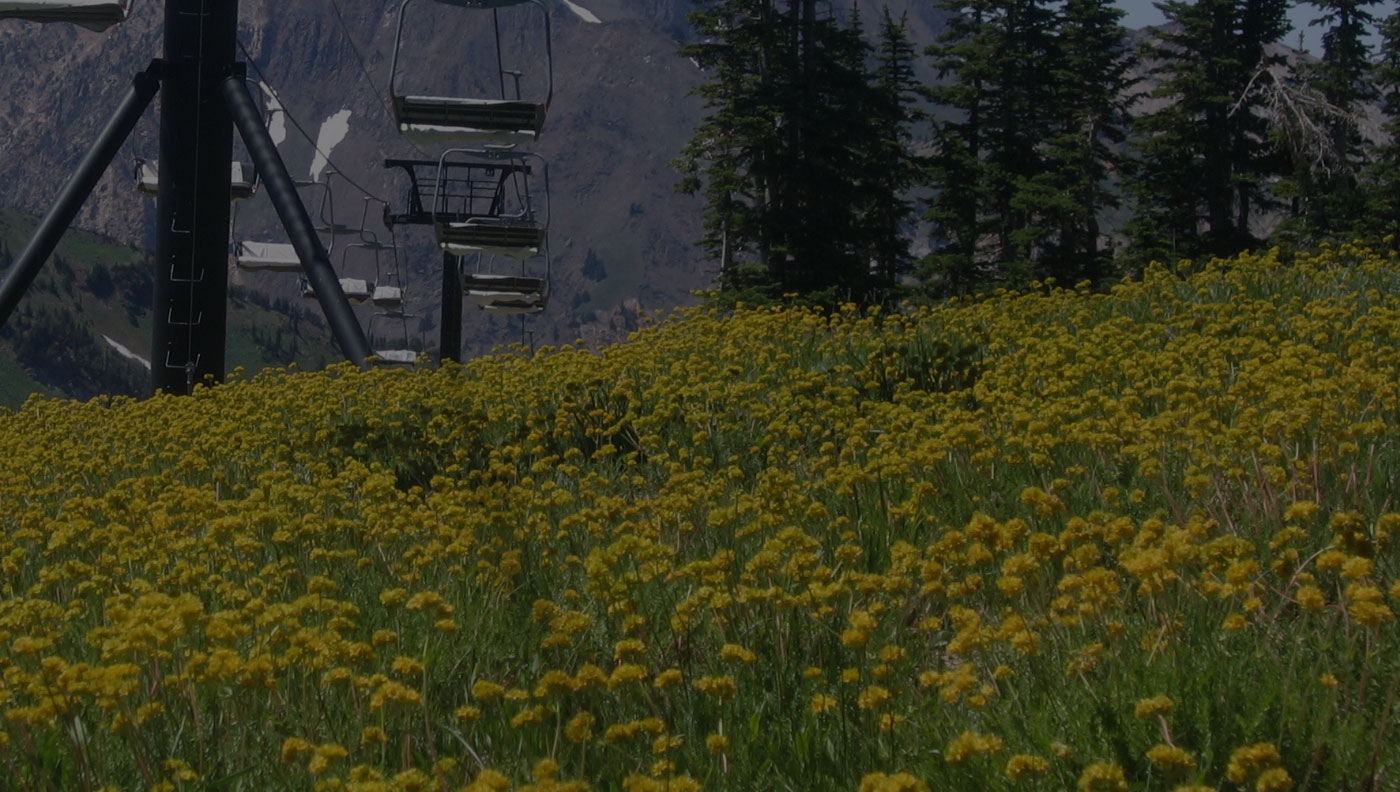 slc bookkeeping utah alta ski area